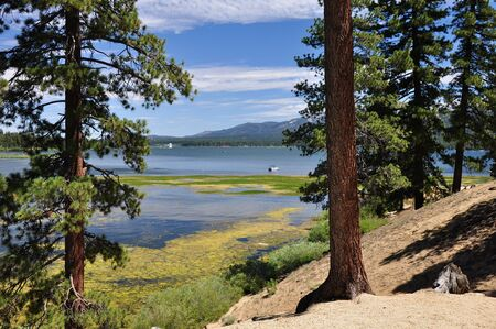 Pine trees frame this view of Big Bear Lake in Southern California. 版權商用圖片