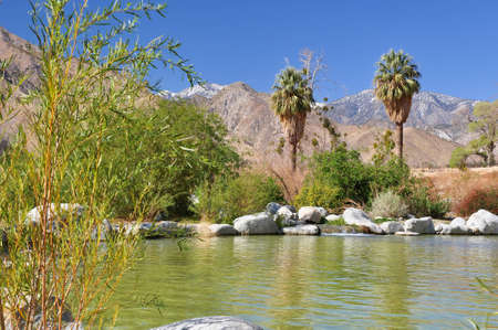 A small pond in the desert creates an oasis near the town of Palm Springs, California. Reklamní fotografie
