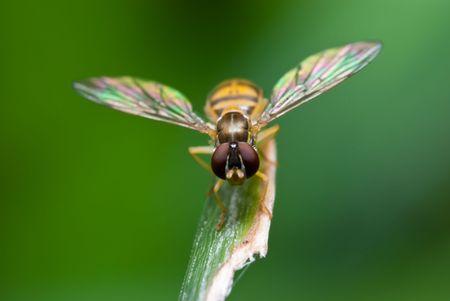 꿀벌을 잔디의 칼날 위에 날다.