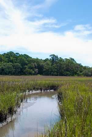Florida saltwater creek in mid day sun.  Stock Photo