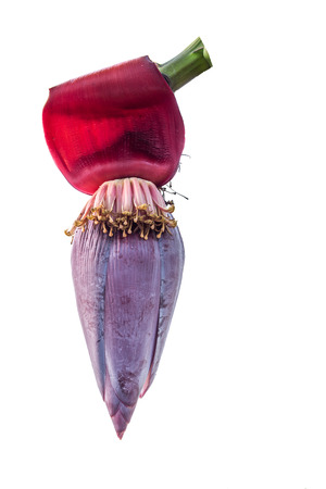 Banana flower isolated on white photo