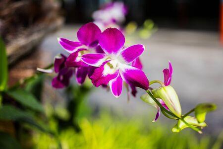 Purple orchid Stock fotó