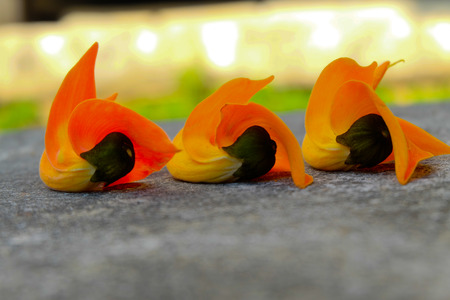 erythrina: Palas flowers  scattered on the marble floor