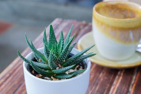 aloe vera: small aloe  cactus in white pot on wood table
