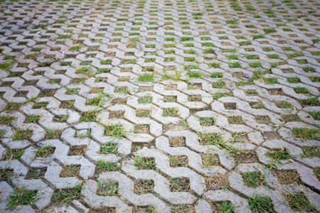 empedrado: Texture pattern of concrete paved ground  inserted with green grass
