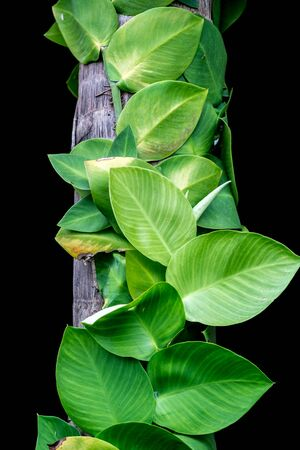 assort: Green Leaf Stock Photo