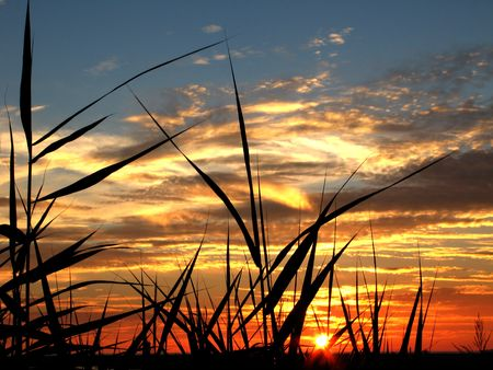 Beautiful sunset with bamboo and herb silhouettes  photo