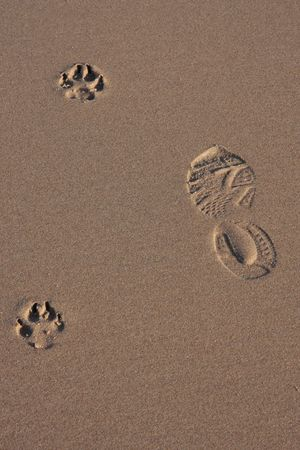 Dog and human footprints on the sand of a beach photo