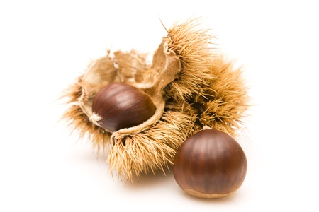 Chestnuts and an open husk isolated on white Stock Photo - 10930683