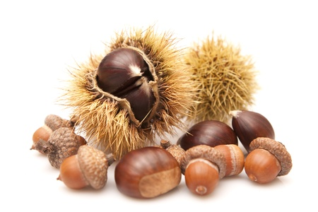 Chestnuts and acorns on a white background