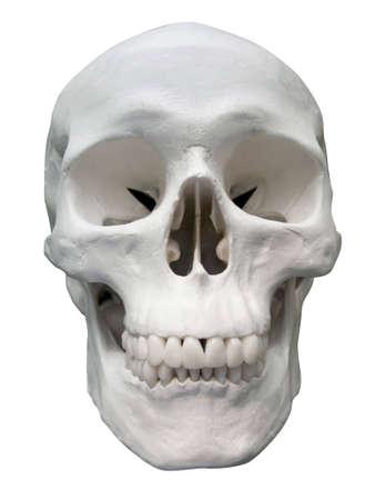 skull Stock Photo - 8099542