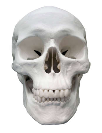 a skull on white bacground
