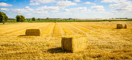 bails: A Norfolk countryside view with the straw bails lying in the field