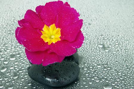 Black stones and flower Stock Photo - 6102256