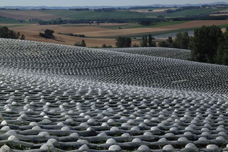 spacing: Melon plants under cloches near Lectoure in SW France - the plastic covering optimises soil temperature and the crop is planted on sloping ground for good drainage