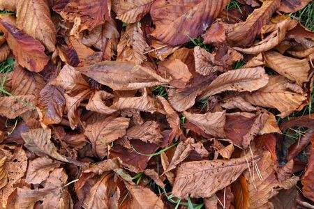 groundcover: Decomposing leaves in the fall