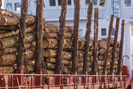 picea: Spruce (picea) Logs Loaded aboard for Export from UK