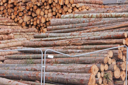 Stockpiled logs in a lumber yard photo