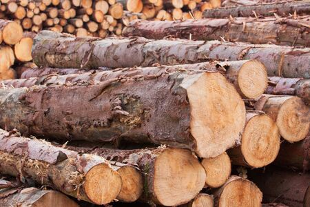 Stacked timber in a lumber yard photo