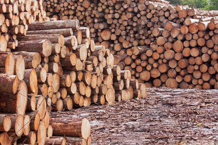 Timber stacked in a lumber yard photo