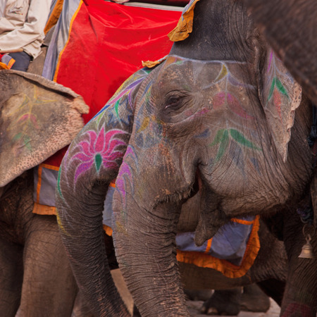 convey: Elephants waiting to convey visitors to the Amber fort, India Stock Photo