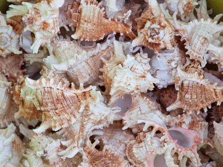 mollusc: Mollusc shells piled up together Stock Photo