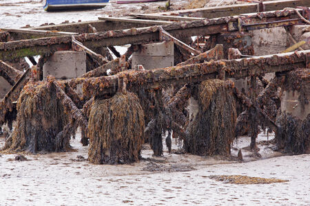 wrack: Seaweed clinging to a pier Stock Photo