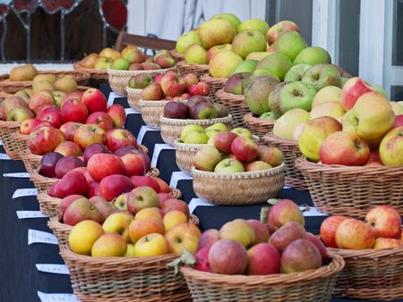albero nocciolo: Varietà di mele in mostra in una fiera autunnale inglese