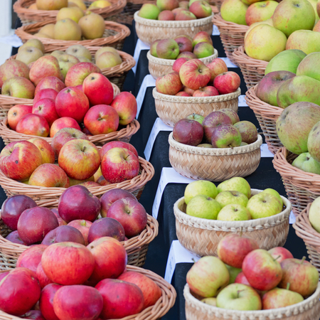 Varieties of eating and cooking apples on display at an English autumn fair