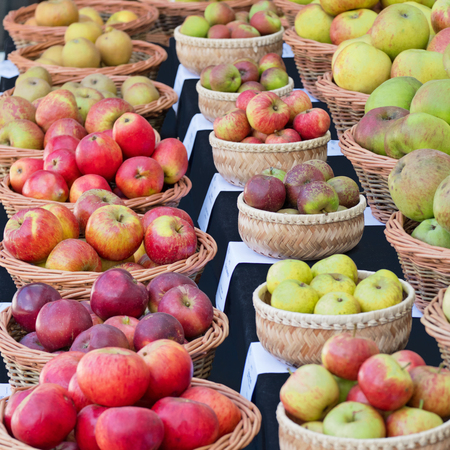 Different varieties of eating and cooking apples on display at an English autumn fair