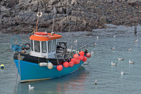 Small fishing boat and European Herring gulls (Larus argentatus) in a Cornish harbour UK Stock Photo