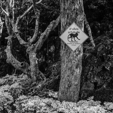 Beware of monkeys attack sign in black and white. photo
