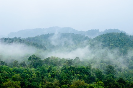 morning fog in dense tropical rainforest, penang, Malaysia Stock Photo - 19123451
