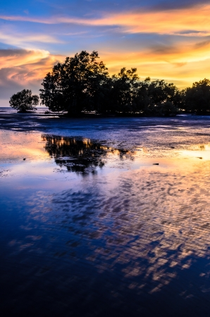 mangrove in sunset photo
