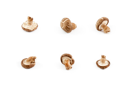 Shiitake Chinese mushrooms isolated on white background Stock Photo