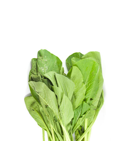 Choi Sum leaves isolated on a white studio background. photo