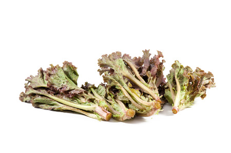 leafy purple lettuce isolated on white background photo