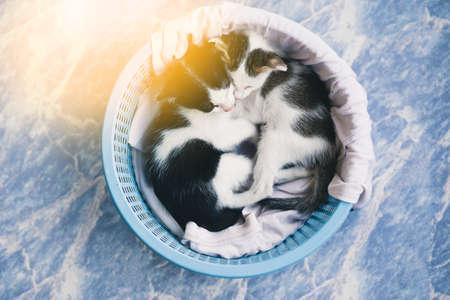 cute kittens: Cute tabby kittens sleeping and hugging in a basket