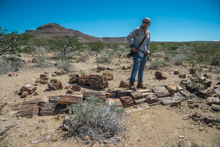 Damaraland, NAMIBIA - APRIL 11, 2017: Petrified forest at twyfelfontein area, 280 million years old petrified trunks in Namibia
