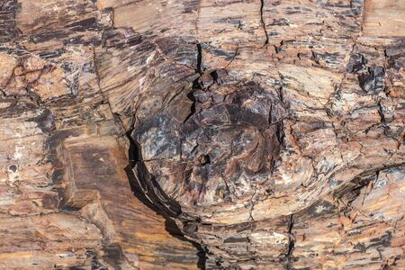 Petrified forest twyfelfontein, 280 million years old petrified trunks in Namibia
