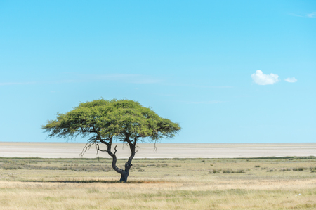 View of the Etosha pan and savannah trees from the Etosha lookout