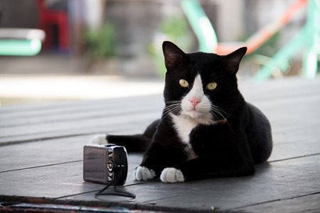 spontaneous expression: Black and white cat with camera on a wooden table
