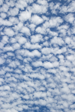 altocumulus: Blue sky with clouds Altocumulus clouds : look like a flock of sheep