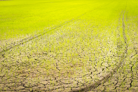 life change: Small sprout struggling for life on cracked earth Stock Photo