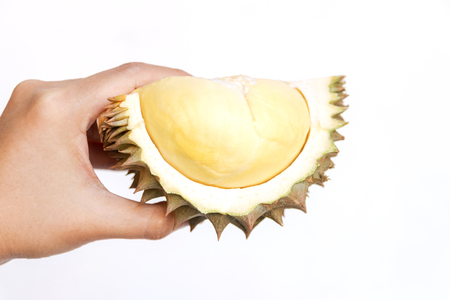 King of fruit; hand holding ripe durian Mon Thong isolated on white background. Durian taste is combination of sweet and creamy all at once. Imagens