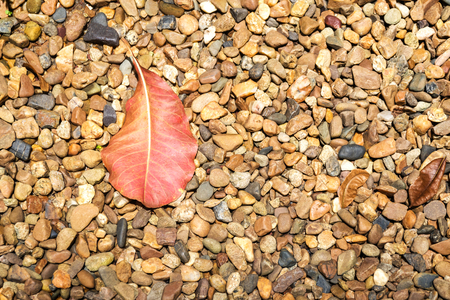 Fallen autumn leaves laying on pebble stone ground with copy space for texture and background. Banco de Imagens