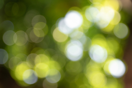 Defocused and blurred image for background under the tree. Banco de Imagens