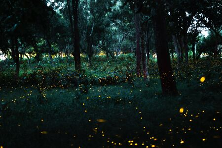 Firefly flying on bush at night in the forest at Prachinburi, Thailand. Abstract and magical nature image (long exposure).