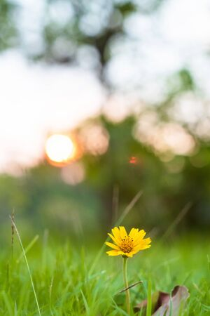 Little yellow flower motion blur of pleasant wind with bright bokeh sunlight, sunny spring background.