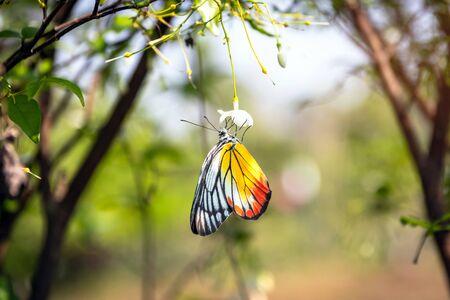 Beautiful butterfly seeking nectar on a flower in garden.